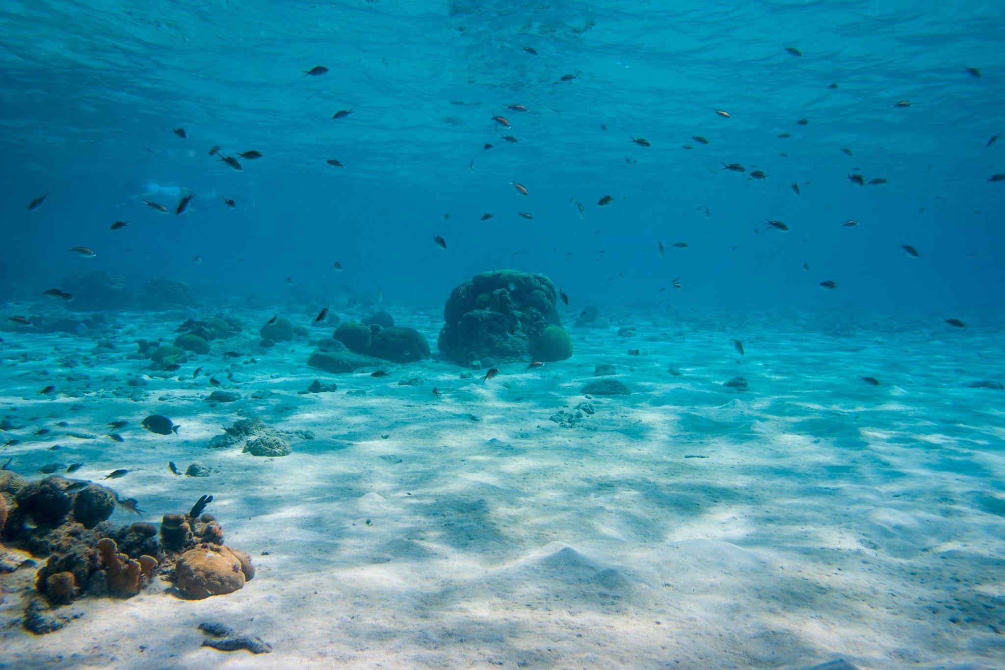 Diving Curacao Ocean View
