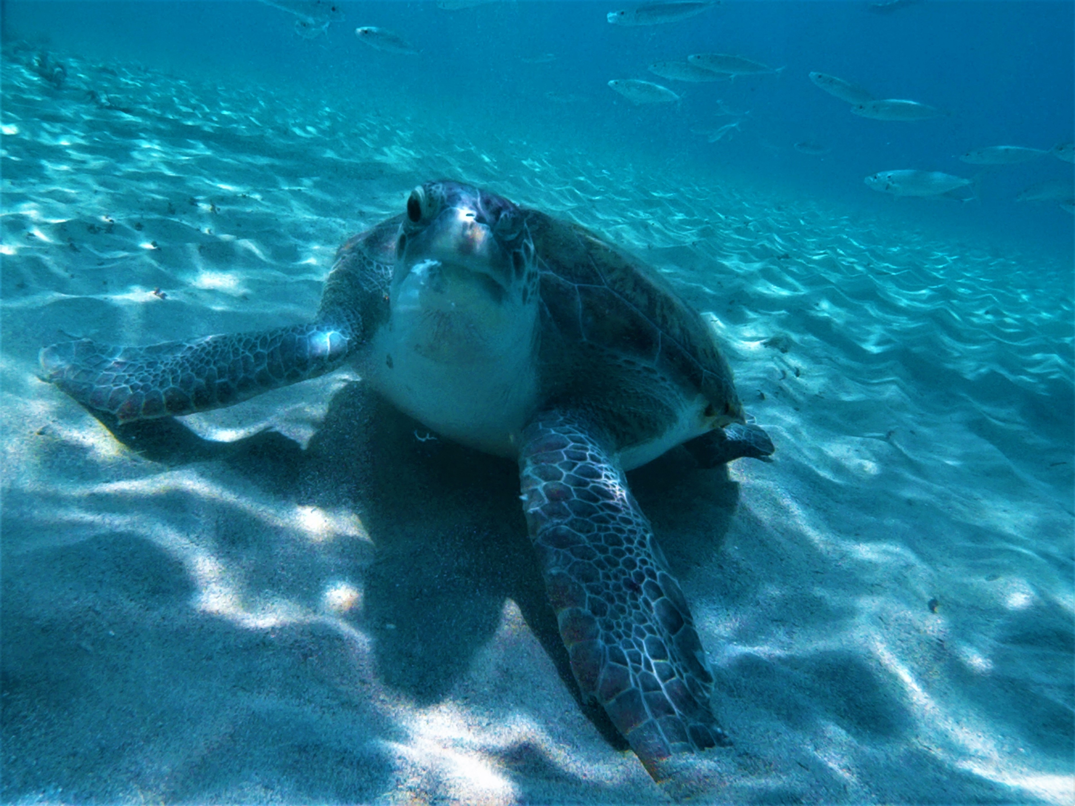 Turtle Spotting Diving Day Theme: